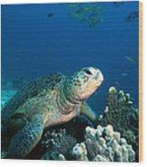 Green Turtle Wood Print
