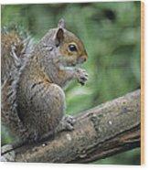 Grey Squirrel Wood Print by David Aubrey