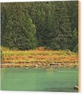 Grizzly Bear Fishing In Chilkoot River Wood Print