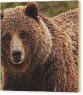 Grizzly Bear, Yukon Wood Print
