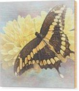 Grunge Giant Swallowtail Wood Print