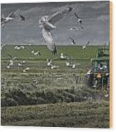 Gull Chased Tractor Wood Print