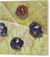 Harlequin Ladybirds Wood Print