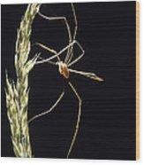 Harvestman Wood Print