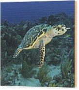 Hawksbill Turtle On Caribbean Reef Wood Print