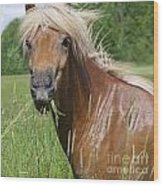 Head Of Chestnut Icelandic Horse Wood Print