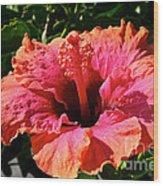 Hibiscus Blossom Wood Print