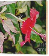 Hibiscus In Bloom Wood Print