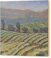 Hillside Vineyard Wood Print by Kip Decker