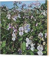 Himalayan Balsam (impatiens Glandulifer) Wood Print