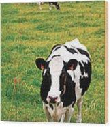 Holstein Dairy Cattle Wood Print