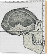 Homo Erectus Skull Wood Print