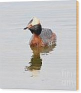 Horned Grebe Wood Print