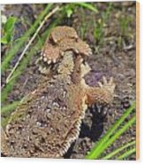 Horny Toad Lizard Wood Print