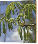 Horse Chestnut (aesculus Hippocastanum) Wood Print