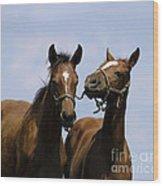 Horse Foul Play Iv Wood Print
