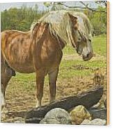 Horse Near Strone Wall In Field Spring Maine Wood Print