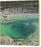 Hot Springs Yellowstone National Park Wood Print