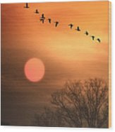 Hot Summer Flight Wood Print by Tom York Images