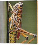 Hubber Grasshopper Wood Print
