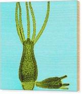 Hydra, Lm Wood Print