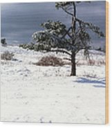 Iced Tree Shenandoah National Park Wood Print