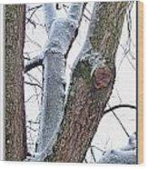 Icy View Wood Print