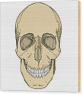 Illustration Of Anterior Skull Wood Print