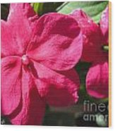 Impatiens Named Dazzler Burgundy Wood Print