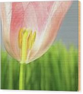 Inside Of A Pink Tulip Wood Print by Sandra Cunningham
