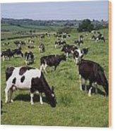 Ireland Friesian Cattle Wood Print