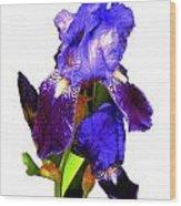 Iris On White Wood Print