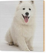 Japanese Spitz Dog Wood Print