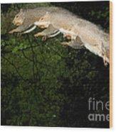 Jumping Gray Squirrel Wood Print