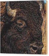Kansas Buffalo Wood Print
