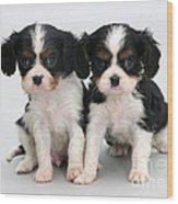 King Charles Spaniel Puppies Wood Print by Jane Burton