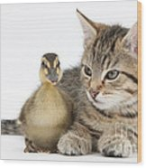 Kitten And Duckling Wood Print