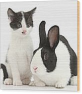 Kitten And Dutch Rabbit Wood Print
