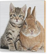 Kitten And Netherland Dwarf-cross Rabbit Wood Print