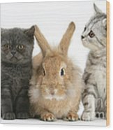Kittens And Rabbit Wood Print