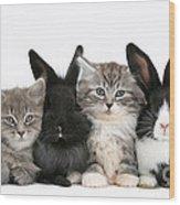 Kittens And Rabbits Wood Print