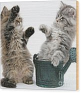 Kittens And Watering Can Wood Print