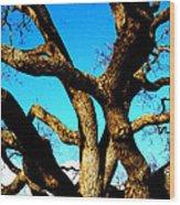 Knarled Oak Tree Wood Print