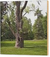 Knurled Tree Wood Print