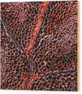 Leaf Anatomy, Light Micrograph Wood Print by Dr Keith Wheeler