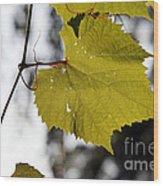 Leaves Of Wine Grape Wood Print