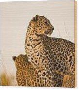 Leopard Panthera Pardus, Arathusa Wood Print
