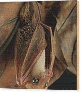 Lesser Long-tongued Fruit Bat Wood Print