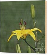 Lily Flowers Wood Print