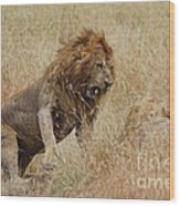 Lion Wood Print by Alan Clifford